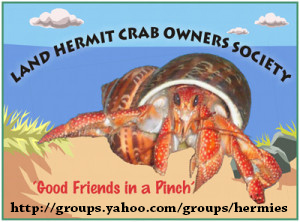 Come join the land hermit crab owners society