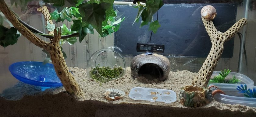 A simple but properly outfitted hermit crab habitat.